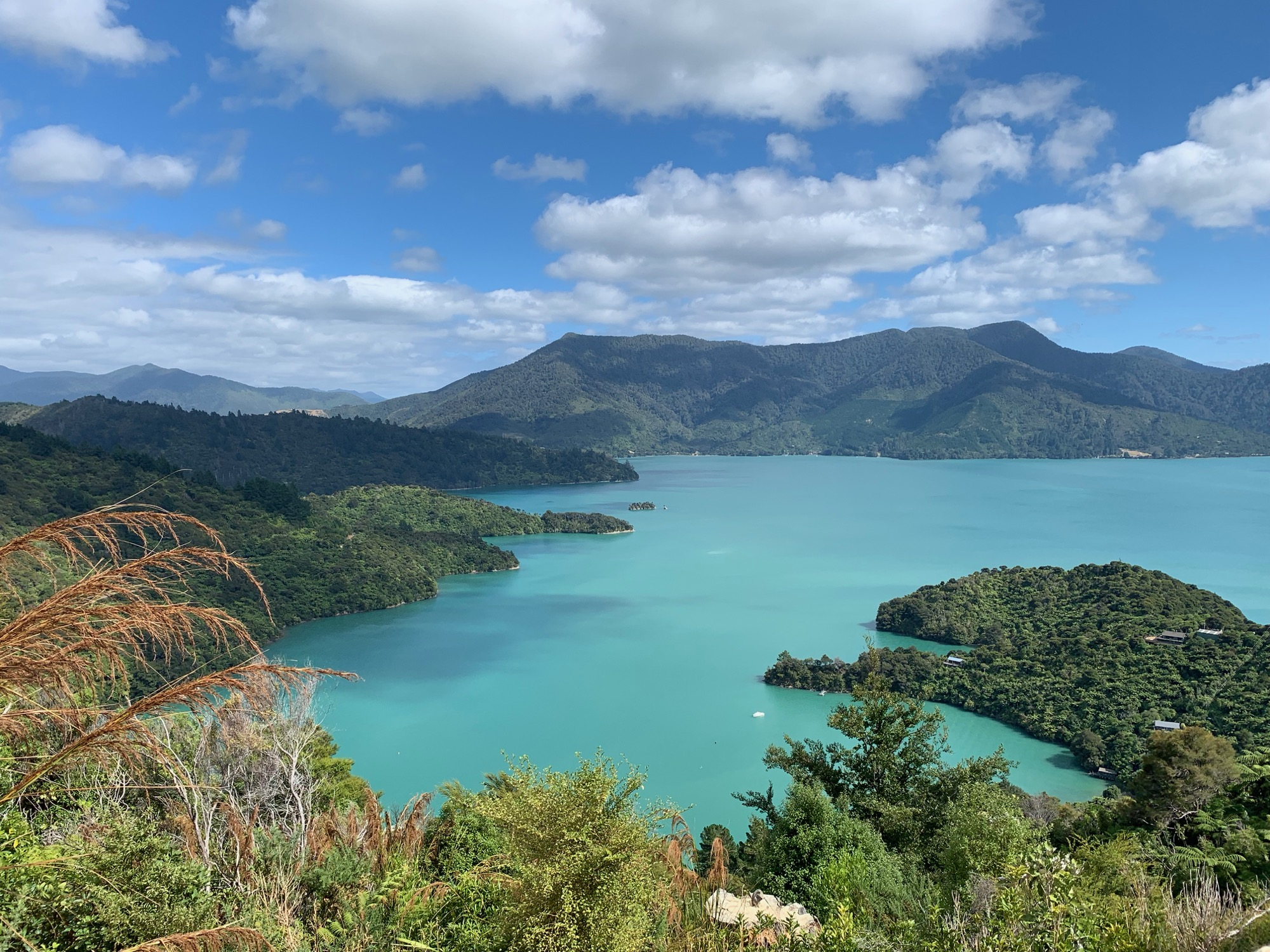 Views of the Sound on The Queen Charlotte Track