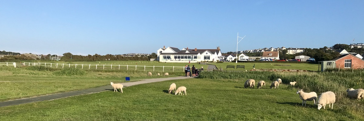 Royal Nth Devon- the first fairway has sheep!