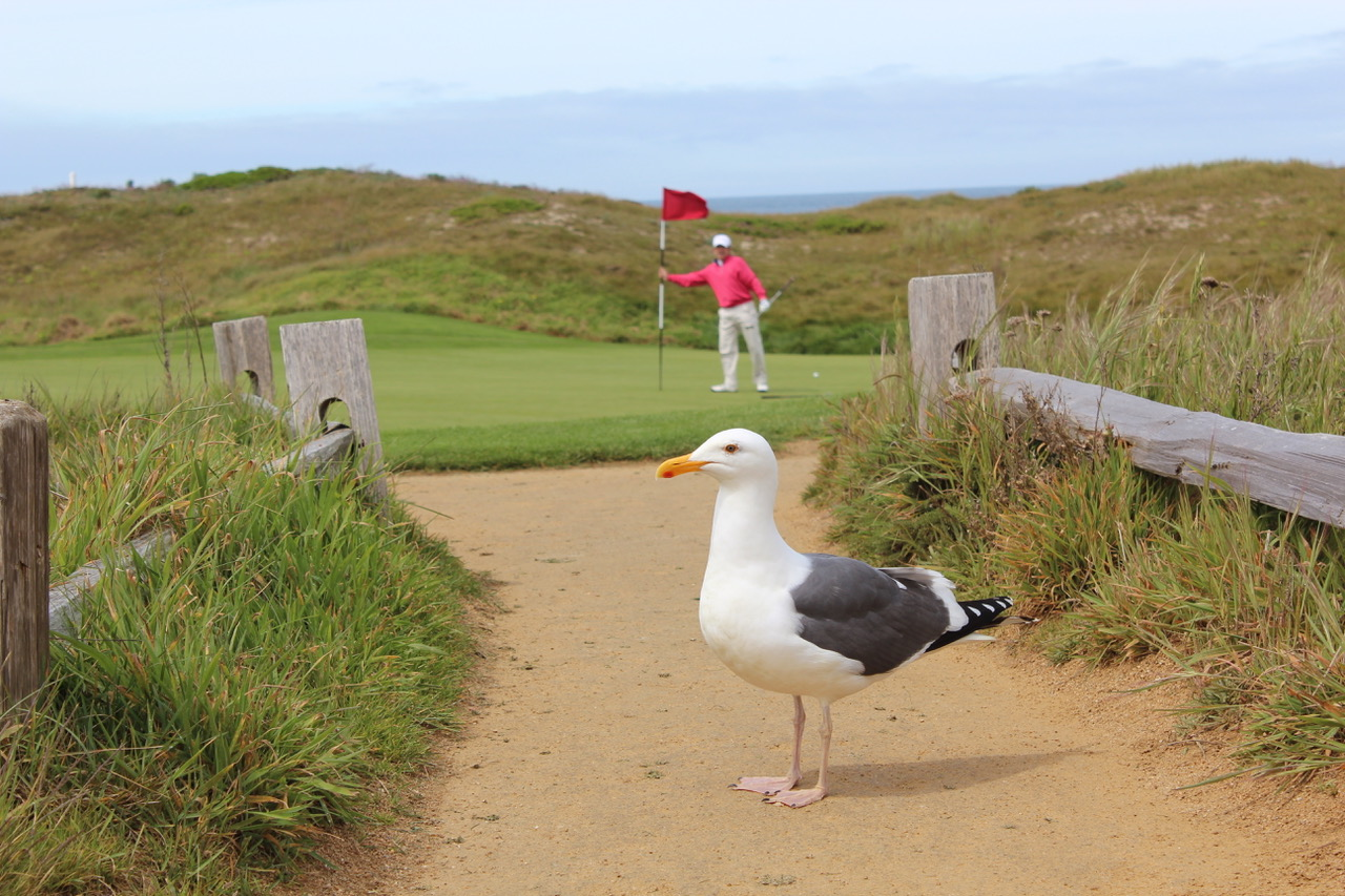 The Links at Spanish Bay- a birdie at the third? Photo by Heather Wood from The Travelling Golfer