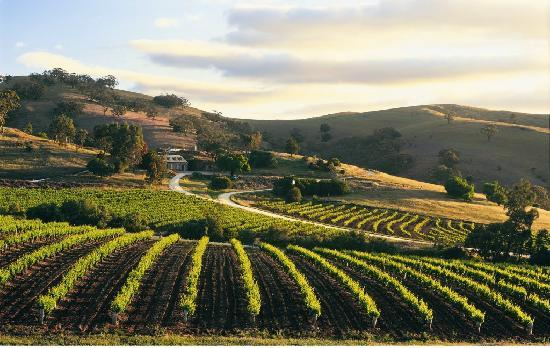 The Barossa Valley